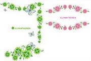 植物花边边框素材22