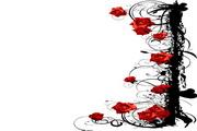 古典玫瑰花矢量图