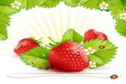 新鲜草莓矢量素材