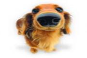 可爱小狗桌面图...