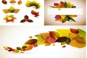 秋天树叶矢量图...