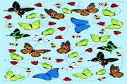 昆虫插画矢量素材