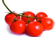 西红柿蔬菜矢量素材
