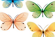 彩色蝴蝶昆虫矢量素材