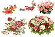 矢量彩绘鲜艳玫瑰花素材