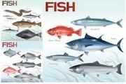 矢量深水鱼图