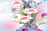 百合花卉矢量素材下载