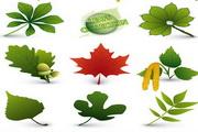 矢量不同植物叶子图