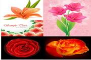 矢量写实鲜花花瓣图