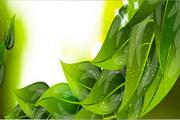 绿色树叶主题banner矢量模板