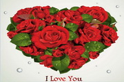 情人节浪漫玫瑰花矢量卡片
