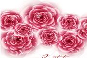 璀璨精美玫瑰矢量素材