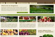 蔬菜网站界面设计div+css模板