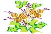 矢量花朵素材30