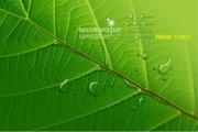绿叶与水珠psd设计素材