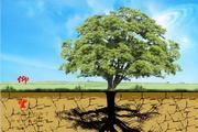 仰望绿色psd环保海报