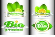 绿色生态瓶贴