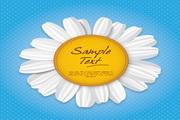 白色菊花图形矢量背景