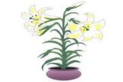 矢量花朵素材65