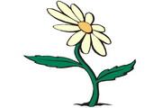 矢量花朵素材75