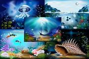 绚丽的海底世界