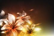 幻彩花朵矢量2