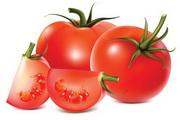西红柿矢量素材