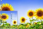 美丽向日葵电脑主题