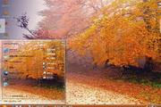 林间小路风景电脑主题