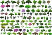 园艺植物灌木psd分层素材
