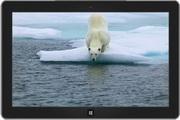 """""""北极熊""""主题..."""