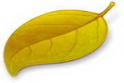 绿色叶子图标下载