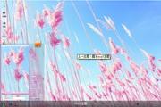粉红麦梗win7桌面 1.0