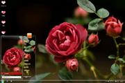 带刺玫瑰电脑主题 1.0