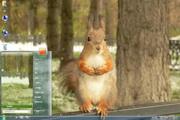 可爱的松鼠Win7主题 1.0