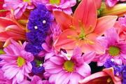 Nice Flowers Free Screensaver 2.0