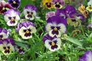Flowers Garden Screensaver 2.0