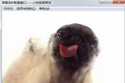 狗狗舔屏幕动态...