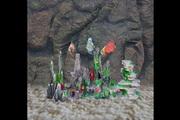 Discus Fish 3D Screensaver