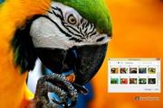 Macaw Windows 7 Theme 1.00