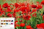 Poppy Windows 7 Theme 1.00