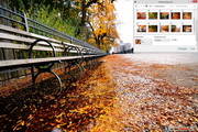 Autumn Road Windows 7 Theme 1.00