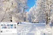 Winter Trees Windows 7 Theme