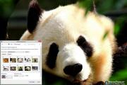 Innocent Animal Faces Windows 7 Theme 1.00