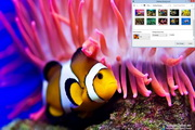 Coral Fish Windows 7 Theme 1.00
