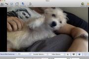 Debut For Mac 2.02