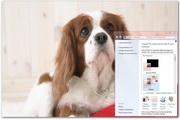 Puppies Windows Theme
