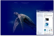 Sea Turtle Windows Theme 1.0
