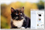 Cats Windows Theme 1.0