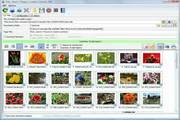 Bulk Image Downloader 4.81.0.0